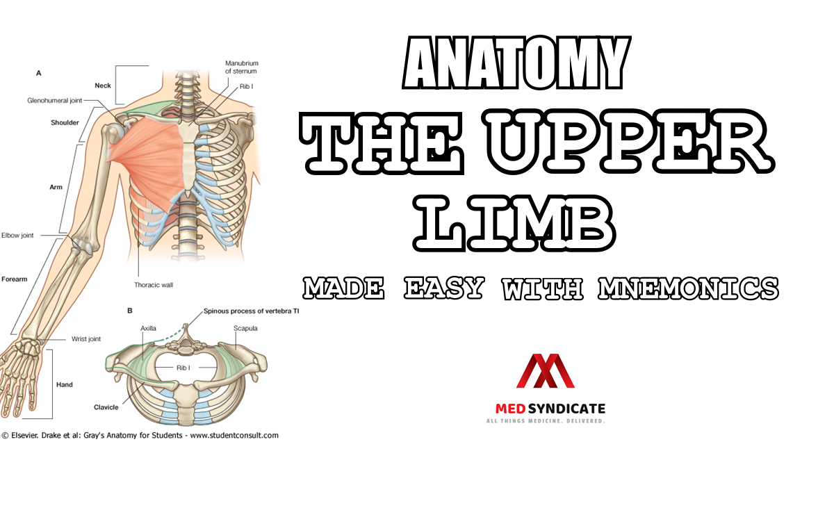 Anatomy The Upper Limb Made Easy With Mnemonics